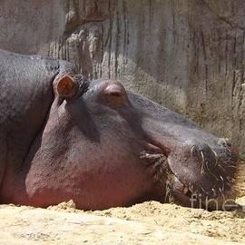 Sara  Raber - Restful Hippo