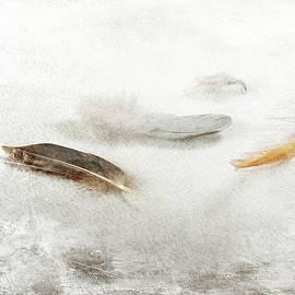 Randi Grace Nilsberg - Resting Feathers