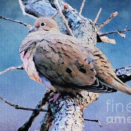 Janette Boyd - Resting Mourning Dove