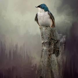Jai Johnson - Resting Tree Swallow