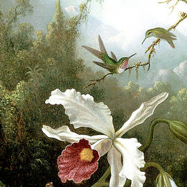Retouched Masters - Orchid and Hummingbirds in tropical forest - Audrey Jeanne Roberts