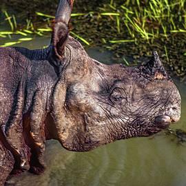 Steve Harrington - Rhino Charge 2