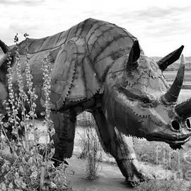 Lauren Leigh Hunter Fine Art Photography - Rhino Roaming
