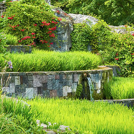 Wim Lanclus - Rice Garden