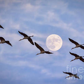 Janice Rae Pariza - Riding Past The Moon
