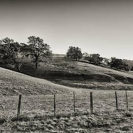 Joseph Hollingsworth - Rillin Hills