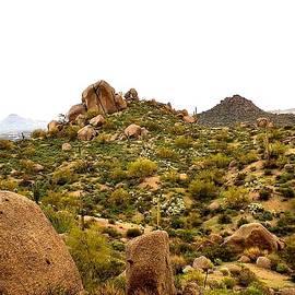 Missy  Brage  - Rio Verde Arizona
