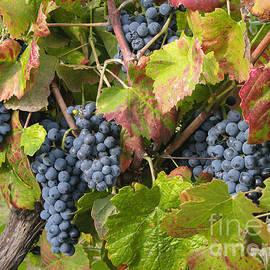 Arlene Carmel - Ripe On The Vine