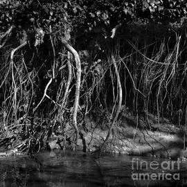 Paul Davenport - Riverbank Entanglements i