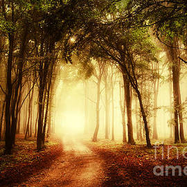 road through a golden forest at autumn - andreiuc88