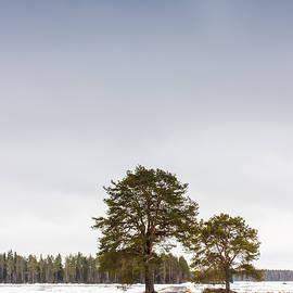 Jukka Heinovirta - Road Through The Fields