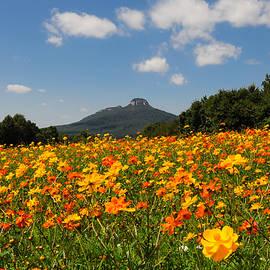 Greg Dollyhite - Roadside Wildflowers