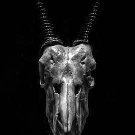 James Aiken - Oryx Skull