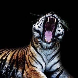 Roar - Martin Newman