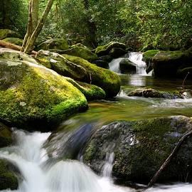 Carol R Montoya - Roaring Fork Motor Trail Waters