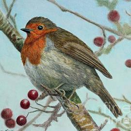 Robin in a Hawthorn Tree