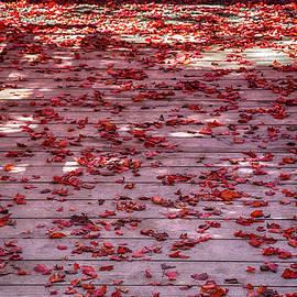 John Haldane - Rolling Out the Red Carpet