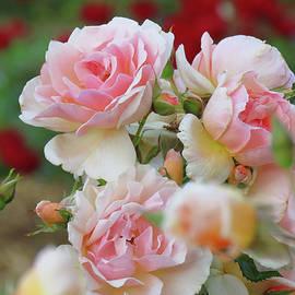 Brooks Garten Hauschild - Romance is in the Air