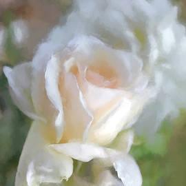 Jennie Marie Schell - Romantic Peach Roses