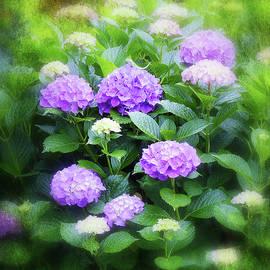 Carla Parris - Romantic Purple Hydrangeas