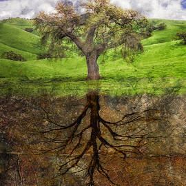Rick Baker - Rooted in Wood