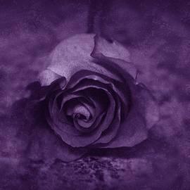 Angie Tirado - Rose - Purple