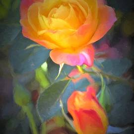 Pamela Cooper - Rose 335