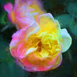 Pamela Cooper - Rose 336
