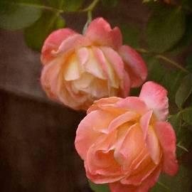 Pamela Cooper - Rose 339