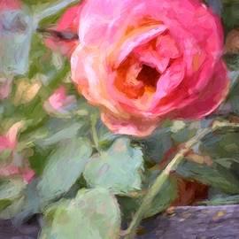 Pamela Cooper - Rose 341
