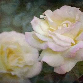 Pamela Cooper - Rose 342