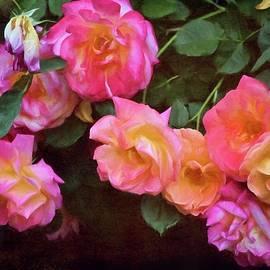 Pamela Cooper - Rose 362