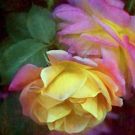 Pamela Cooper - Rose 364