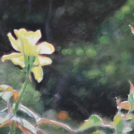 Christopher Reid - Rose 37