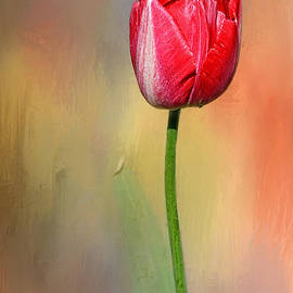 Kaye Menner - Red Tulip at Sunset by Kaye Menner