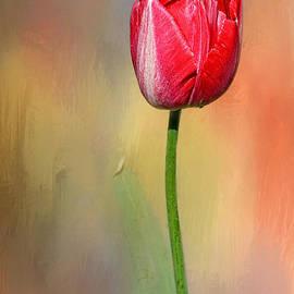 Kaye Menner - Red Tulip at Sunset by Kaye Menner