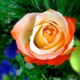 Wonju H - Rose beauty
