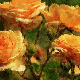 Geraldine Scull - Rose bush
