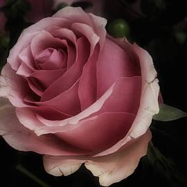 Richard Cummings - Rose Celeb