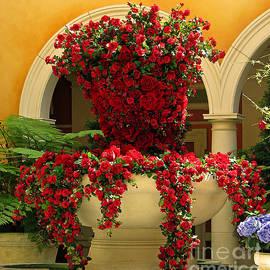 Sabrina K Wheeler - Rose Fountain
