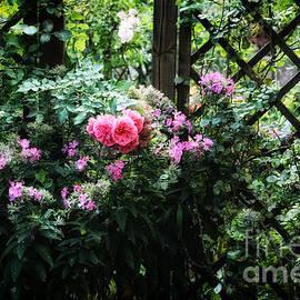 Rose garden 2 - SK Pfphotography