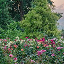 Don Schwartz - Rose Garden View