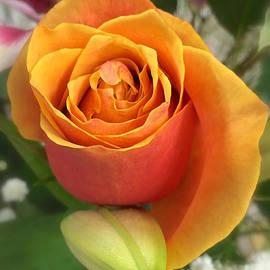 Wonju Hulse - Rose holding lily