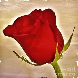 Marsha Heiken - Rose in Red