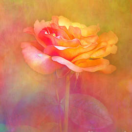Judi Bagwell - Rose in Sunlight