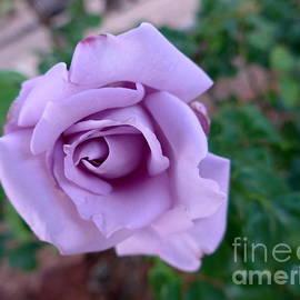 Marlene Rose Besso - Rose Love