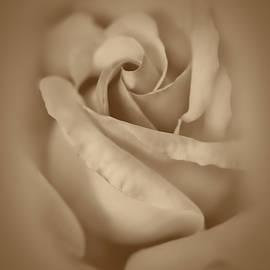 Jennie Marie Schell - Rose Flower Macro Fawn Brown