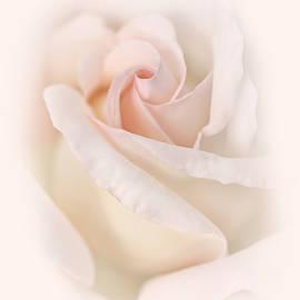 Jennie Marie Schell - Rose Flower Macro Soft Pink