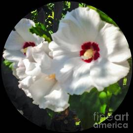 Debra Lynch - Rose Of Sharon Encircled With Care