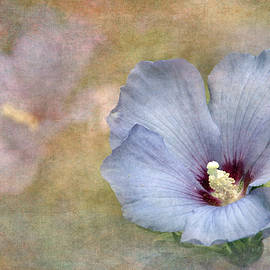 Angie Vogel - Rose of Sharon - Hibiscus
